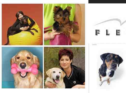 Ideas de negocios rentables el alquiler de perros entrenados como mascotas