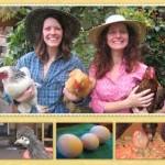Ideas de negocios rentables, hospedaje y cuidados de gallinas y pollos