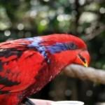 Ideas de negocios especializadas para hacer en casa la crianza y la compra y venta de aves exóticas