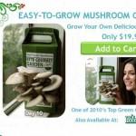 Ideas de negocios rentables y ecológicas, tu propio jardín descartable de especias u hongos en una caja