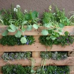 Como hacer un jardín dentro de un espacio reducido para sembrar tus propias especias y ahorrar dinero