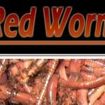 Ideas de negocios verdes, criar y vender gusanos para deshacerte ecológicamente de la basura de tu casa